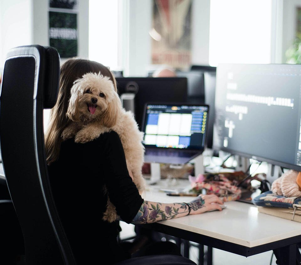woman working on her computer holding a dog